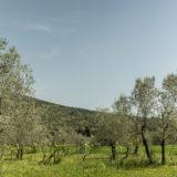 Villa-Capponi (5)